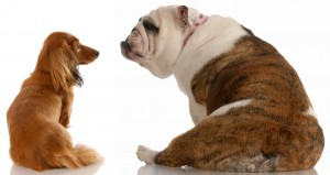 """Oradell Animal Hosptial Veterinarian Says"""" Bloating In Dogs Is Life-Threating"""""""