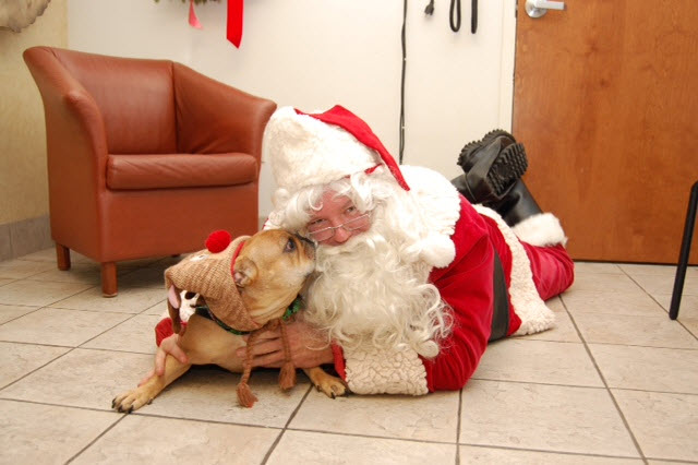 Pet Photos with Santa
