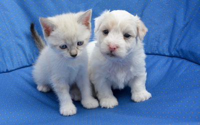 Heart Murmurs in Puppies & Kittens